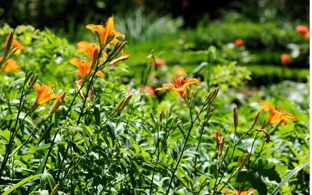 Entreprise entretien jardin